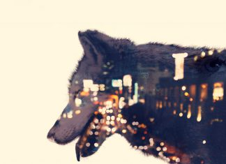 Wolves Eco