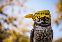 Dirtybird Owl